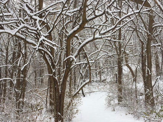 Snow blankets Trail No. 3 in Prophetstown State Park