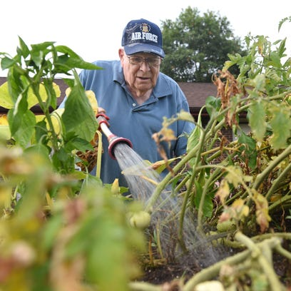 Allen Pickelsimer, 85, waters tomatoes  at Cedar Hill