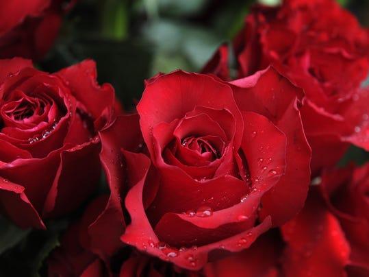 roses file.jpg