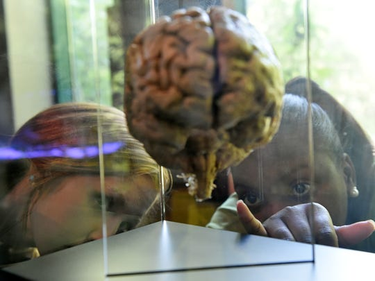 """Sylvia Robinson, conservation educator, right, and museum volunteer Dakota Rummel inspect a display of brains as the Mississippi Museum of Natural Science gears up for  """"Goose Bumps! The Science of Fear."""" The exhibit will be on display Saturday through Dec. 30 at the Mississippi Museum of Natural Science."""