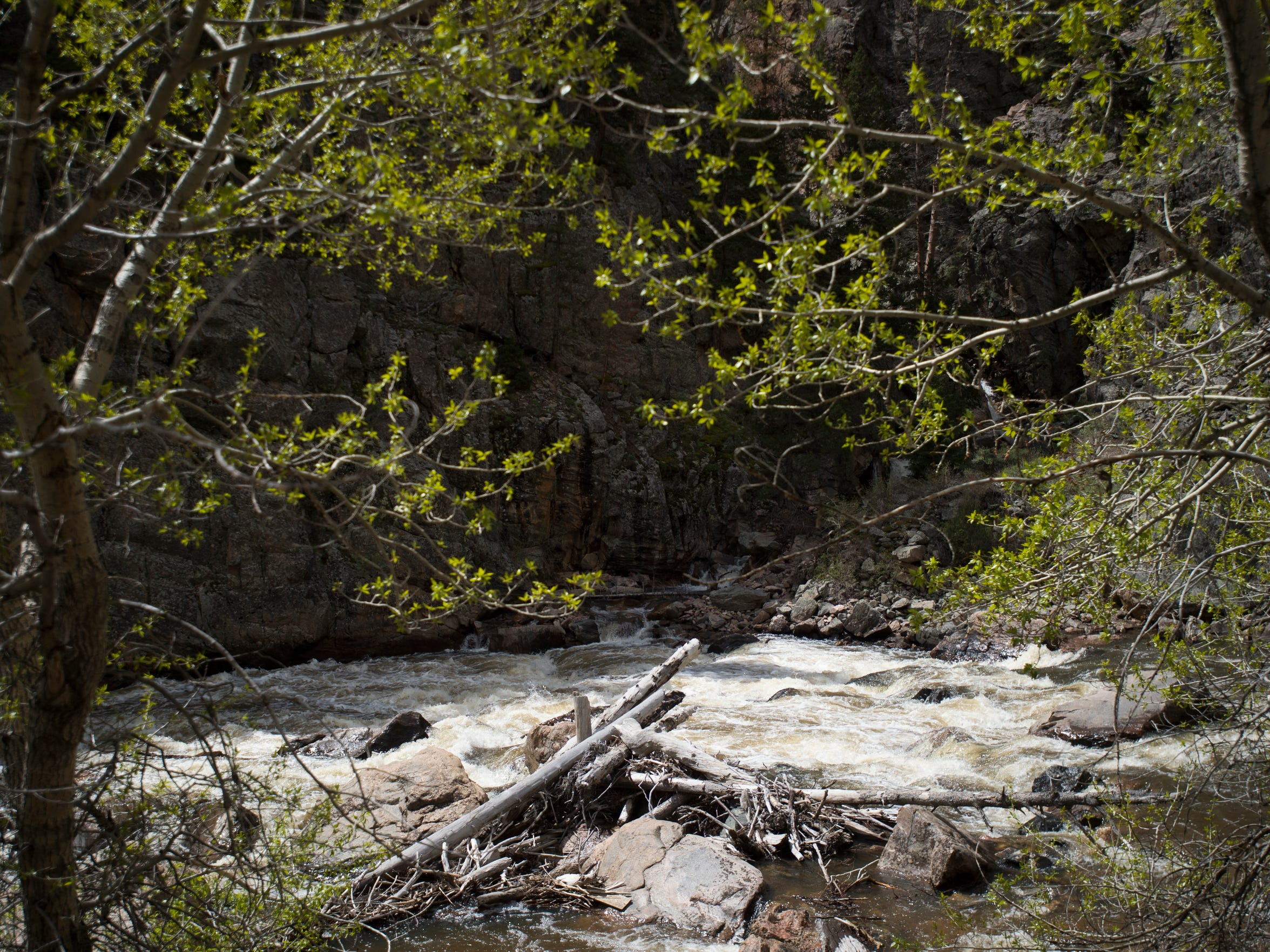 The Cache la Poudre River flows through Poudre Canyon Thursday, May 19, 2016.