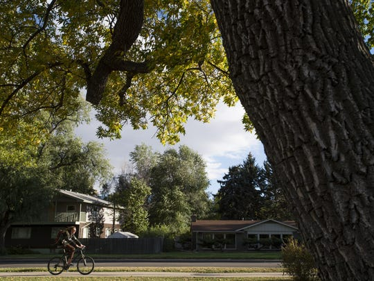 A cyclist passes by an ash tree in City Park Tuesday, October 4, 2016.
