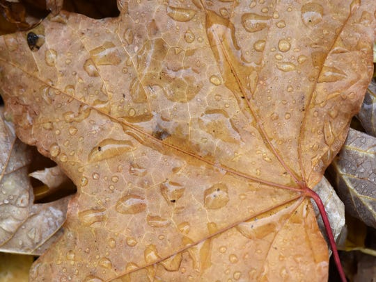 Rain drops cover a dry leaf from Thursday's autumn