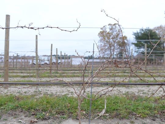 Salted Vines Vineyard and Winery recently opened in
