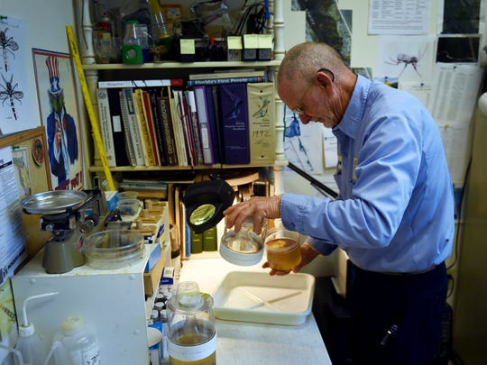 Bruce Perry, a biologist with Indian River Mosquito Control, works in his lab March 15, 2017, with larvae and adult yellow fever mosquitoes, or Aedes aegypti mosquitoes. The yellow fever mosquito is the main culprit when it comes to the spread of the Zika virus.