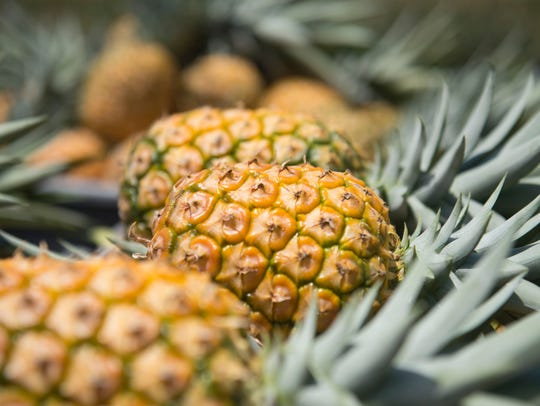 The annual Jensen Beach Pineapple Festival returns Nov. 16-18 with a revamped, homegrown theme.