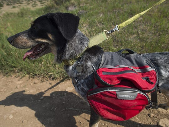 Django carries water and food in a bag on his back