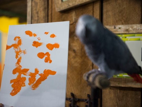 Zoo Knoxville's parrot Einstein sits near his painting at Zoo Knoxville Tuesday, Sept. 5, 2017. Many animals at the zoo paint for enrichment.