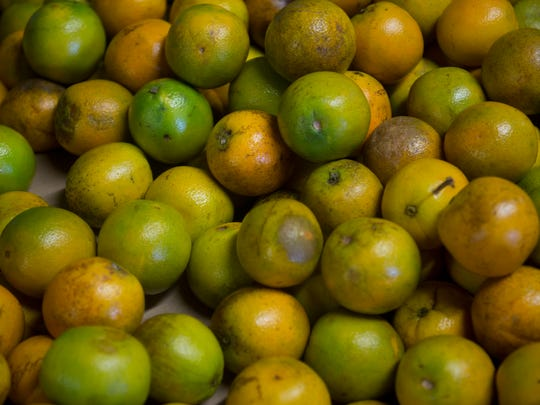 The Treasure Coast is known for its citrus growing,especially oranges and grapefruits.