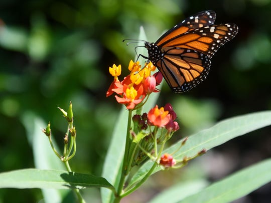 The Garden Festival at Heathcote Botanical Gardens in Fort Pierce is this weekend.