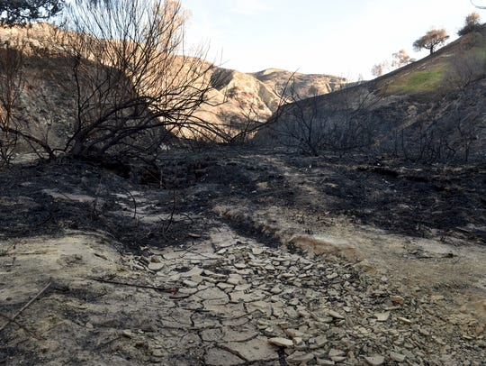 Burned brush covers the landscape in a canyon leading