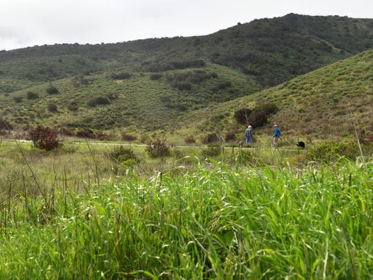 Lush vegetation in the hills of Rancho Sierra Vista