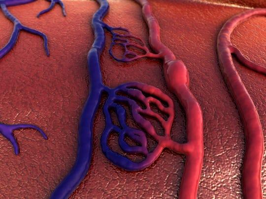 Vein and artery