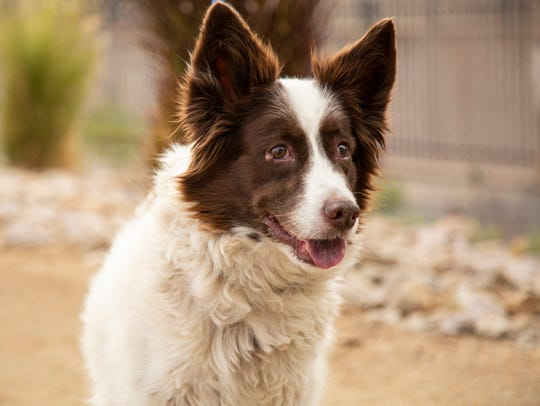 Terabithia is available for adoption March 24, 2019,