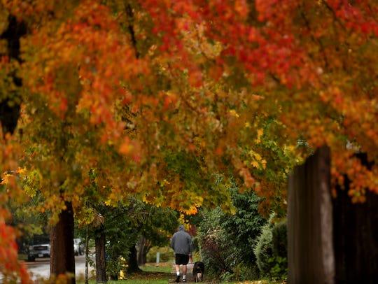 A man walks dogs in the rain near Englewood Elementary