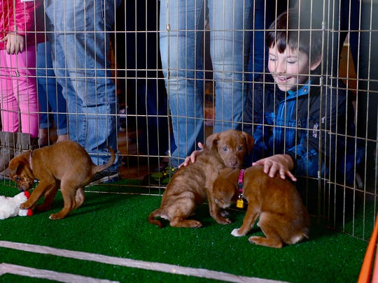 A pair of puppies gets advice from the sideline from Alex Fleury, 9, during the puppy bowl at Sanctuary Brewing Company in Hendersonville on Sunday, Feb. 5, 2017.
