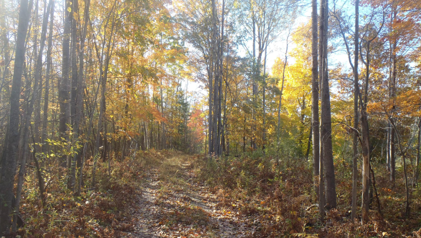 Michigan DNR to auction more than 1,200 acres of public land