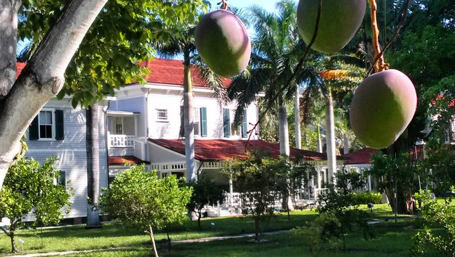 The Edison Ford Gardens have 42 mango trees.