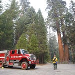 Fire trucks and fire fighters stand guard near the General Grant tree at Grant Grove in Kings Canyon National Park, Saturday, Sept. 12, 2015. (AP Photo/Gary Kazanjian)