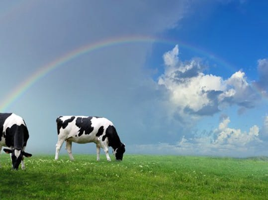 two-cows-under-a-rainbow_large.jpg