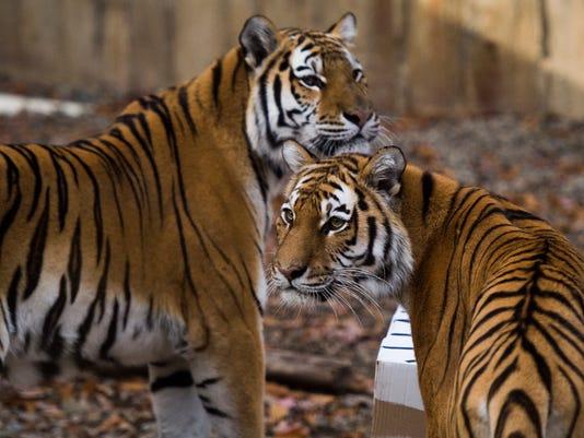 20151031_BGM_Zoo