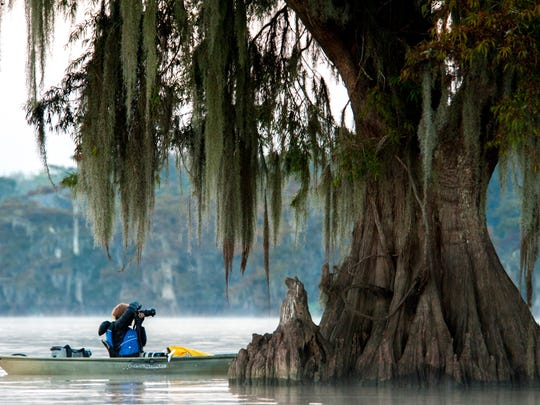 Theresa Low takes photos of cypress trees in the Atchafalaya Basin during a November 2016 photography tour and workshop.