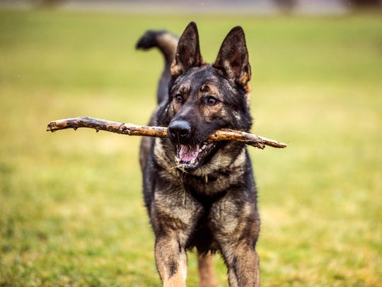 Alan plays fetch before the start of his shift as a