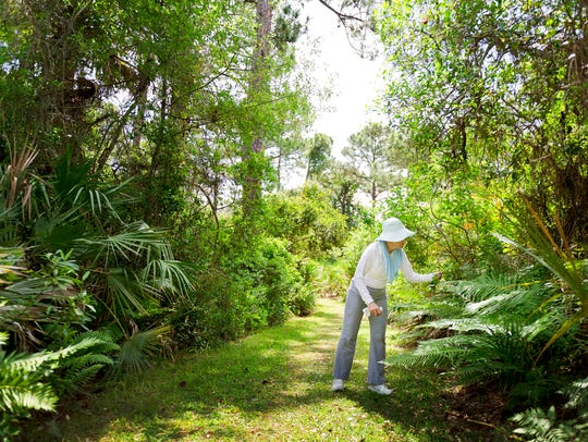 Joan Bausch, of Sewall's Point, a member of the Martin County chapter of the Florida Native Plant Society, examines a fern Friday, May 12, 2014, along the Halpatiokee Trails area in the Savannas Preserve State Park. Environmentalist Lace Vitunac, who died April 22, was instrumental in persuading the state to preserve this sensitive site.