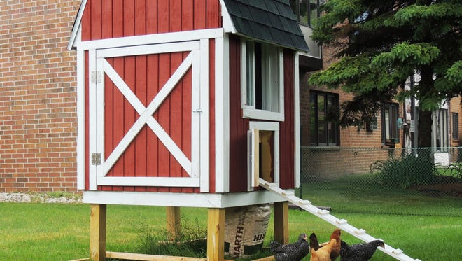 """Four chickens are now providing """"hen therapy"""" at Morningside Health Center. Staff at the center have found the chickens reduce depression and loneliness in residents and have resulted in more frequent visits by residents' families."""