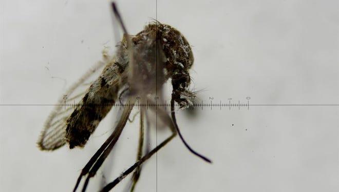Florida investiga hoy un posible nuevo caso de zika local y analiza si es consecuencia del foco del virus detectado en Miami, donde se han presentado los 16 casos autóctonos del país.