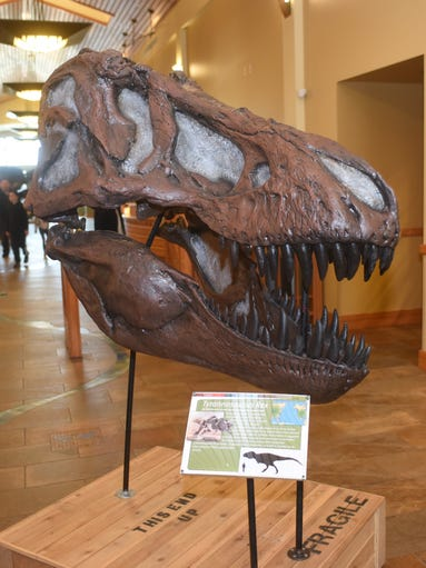 Scenes from the Dinosaurs: Fossils Exposed! at the