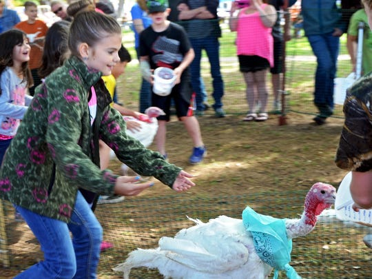 Sarah Klyn gently persuades a gobbler to follow her to the finish line during the turkey races at Turkey Fest in 2015 on the Henrietta Courthouse Square.