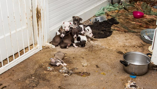Two Huntingdon residents are charged with animal cruelty after 22 dogs were rescued from their home on Sunday, according to police.