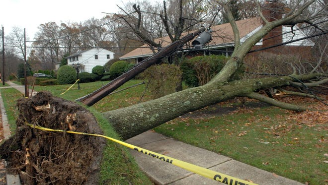 A massive tree took down a telephone pole on Greenrale Avenue in Wayne during Sandy.