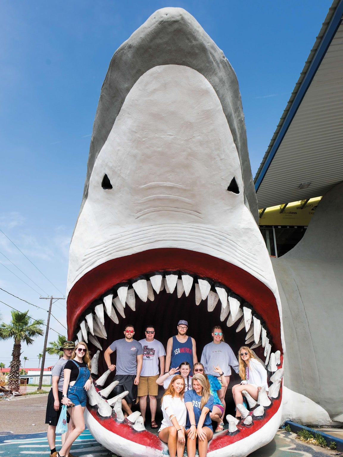 This massive open-jawed shark sculpture, a popular
