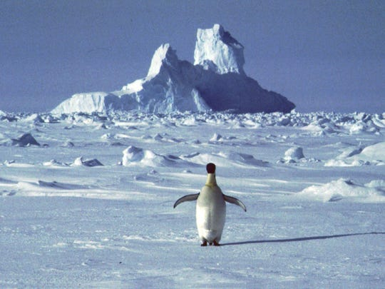 A lonely penguin appears in Antarctica during the southern hemisphere's summer season, in this file photo.