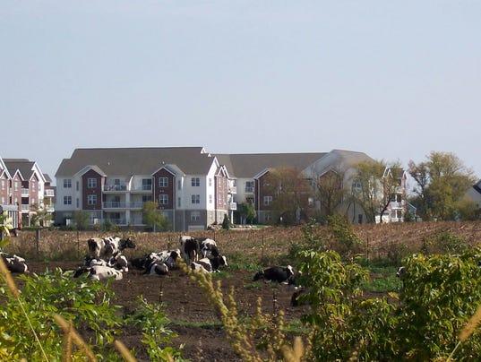 WSF-0317-Gloria-Farmland-citycows.jpg