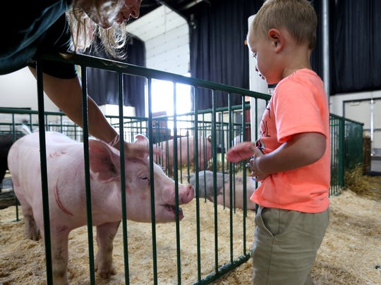 A little boy reaches to pet a pig in the swine area