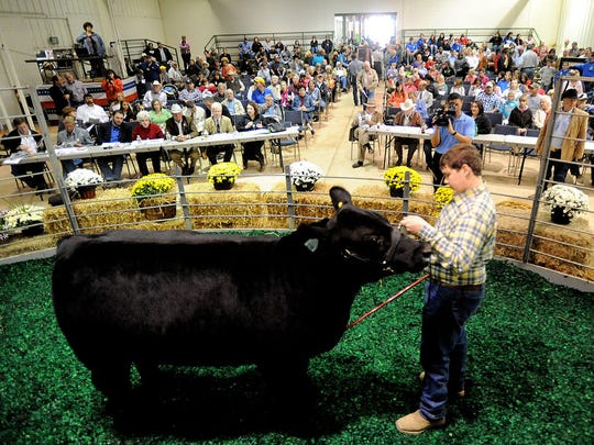 Colby Lingo, of West Carroll Parish, shows his Louisiana-bred grand champion steer to kick off the 2011 Junior Livestock Sale at the State Fair of Louisiana in Shreveport.