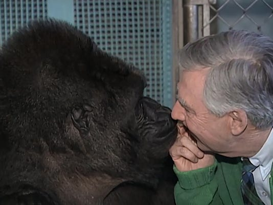 636541379576387002-Its-You-I-Like-Koko-the-Gorilla-Photo-Credit-The-Fred-Rogers-Company.jpg