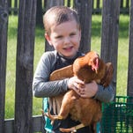 Editorial: How chickens and neighbors can coexist