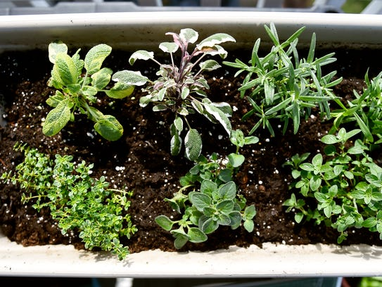 Grow your favorite herbs in containers on your balcony