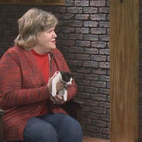 Watch Interview: Little Rock Animal Village: Sam and Stevie looking for forever home