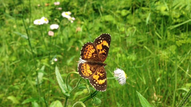 About 575 species of butterflies appear in the Lower 48. A guided hike will highlight some of those that live in Itasca State Park.