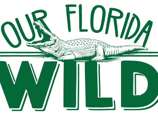"FLORIDA TODAY's new ""Our Florida Wild"" series launched July 22, 2018, during Shark Week."