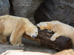 Cincinnati Zoo offers free admission to dads on Father's Day