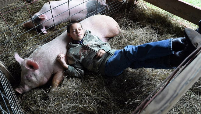 Levi Hyrum Pennington, 11, of Norfork, pretends to hang out with his hog, Porker, on Thursday at the Baxter County Fair.