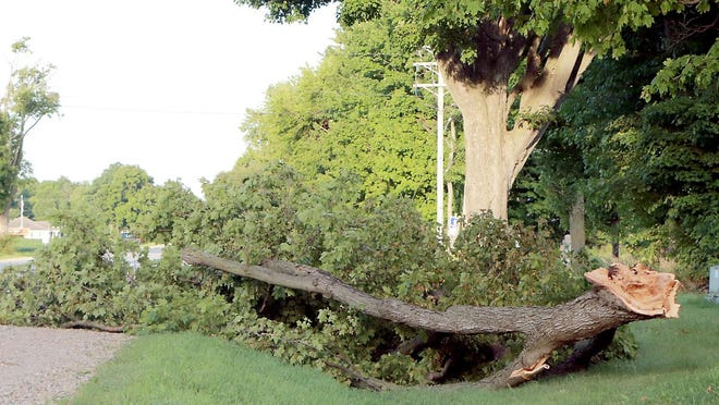 This large section of a tree along U.S. 12 west of White School Road was broken off Monday during a storm moving through St. Joseph County.