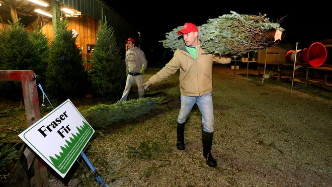 Country Cove Christmas Tree Farm in Murfreesboro offers pre-cut trees and trees customers can choose and cut themselves.