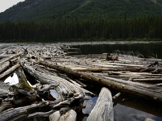 The log jam at Trout Lake in Glacier National Park.